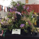 Devon Orchid Society display