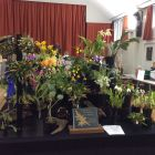 Somerset, Wiltshire & Dorset Orchid Society display
