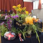 Bristol & West of England Orchid Society display