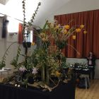 Writhlington School Orchid Project display