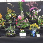 Devon Orchid Society display<br />Gold medal winner